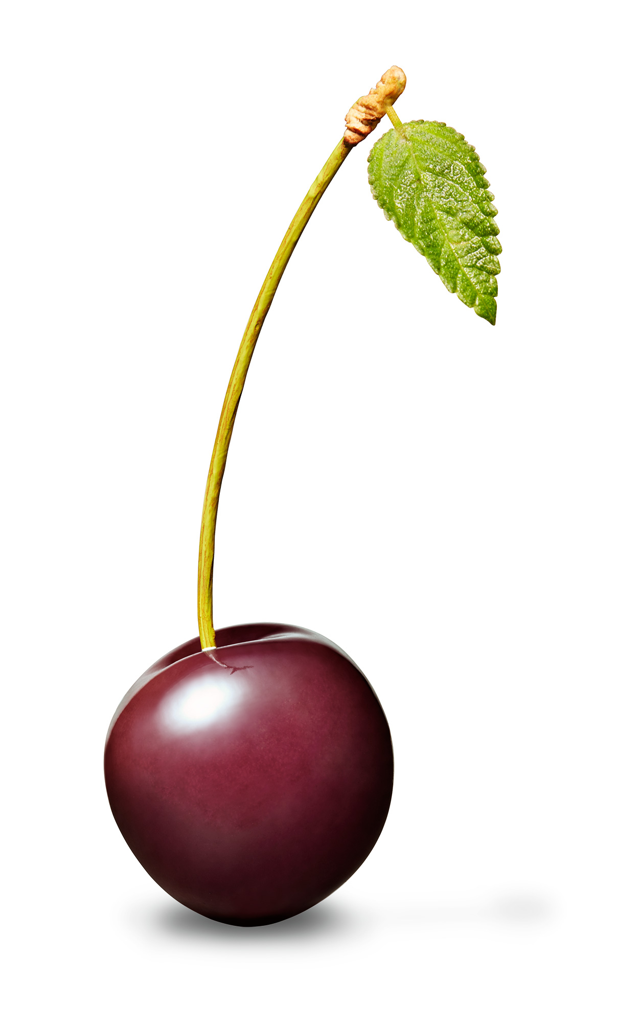 black_cherry_final_ALT